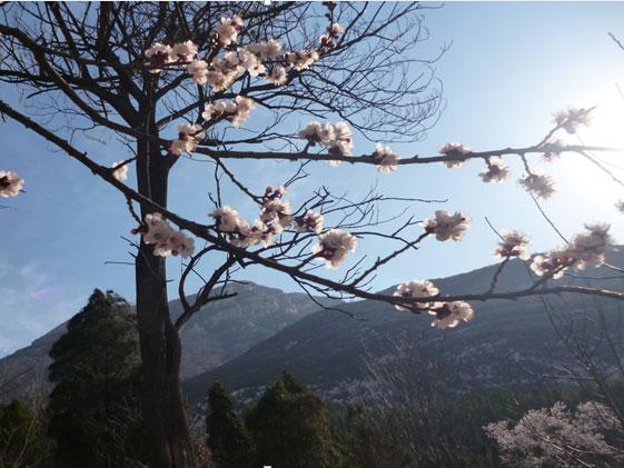 少林寺的树