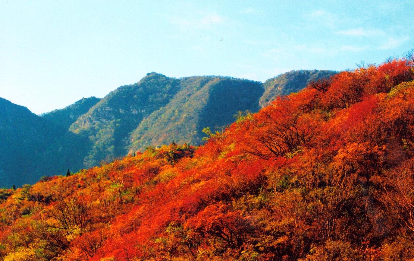 港中旅嵩山景区官方新浪微博或微信的游客均可获赠精美红叶礼品一份.